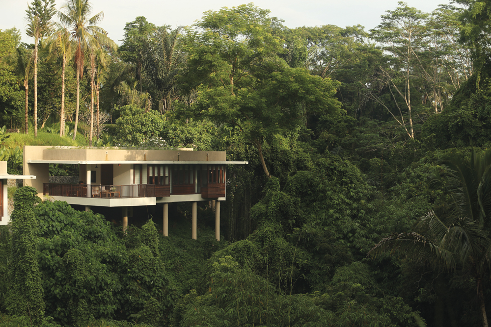 Travel review the alila ubud 39 s terrace tree villas da for Terrace trees