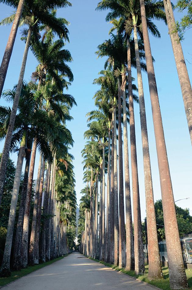 Jardim-Bot+ónico---Rio-de-Janeiro---Brasil---Foto-Alexandre-Macieira--Riotur